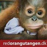 Jeg støtter Red Orangutangen